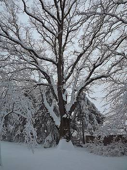 Winter Oak by John Wartman