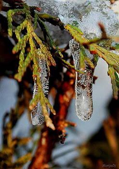 Winter ornament by Marija Djedovic