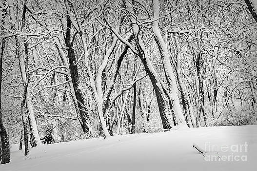 Elena Elisseeva - Winter park landscape