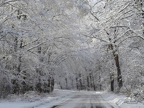 Winter Road by Steph Maxson