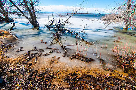 Winter Shore At Barr Lake by Tom Potter