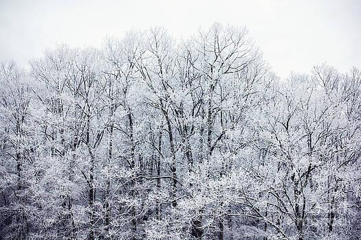 Winter Trees by Joan McCool