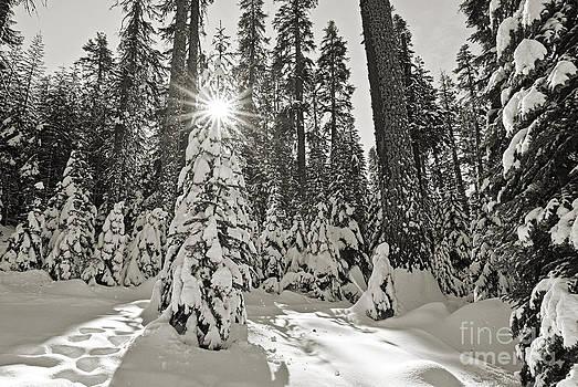 Jamie Pham - Winter Wonderland - Badger Pass in Yosemite National Park