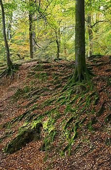 Woodbury Castle woods by Pete Hemington
