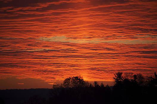 Elaine Mikkelstrup - Wyevale Sunrise