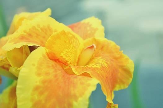 Yellow Iris by Cathie Tyler