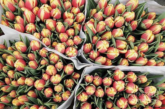 Oscar Gutierrez - Yellow Orange Tulip Bouquets
