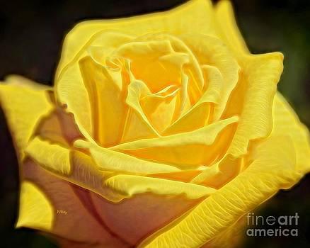 Patrick Witz - Yellow Rose