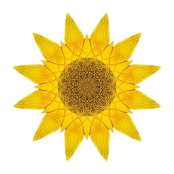 Yellow Sunflower X Flower Mandala White by David J Bookbinder