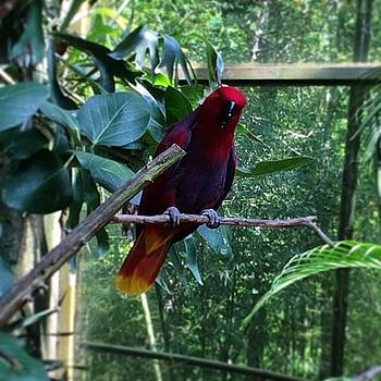 #zoo #nczoo by Shari Malin