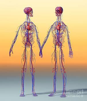 Roger Harris - Cardiovascular System, Artwork