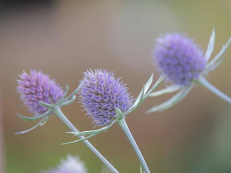 Flower Series by Keith Rautio