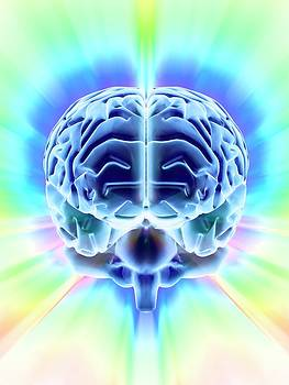 Human Brain by Pasieka