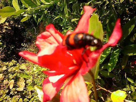 Flower by Amisha Tripathy
