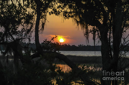 Dale Powell - Lowcountry Spanish Moss Sunset