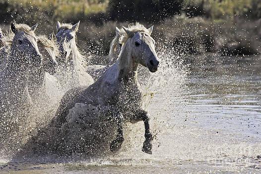 M Watson - Camargue Horses
