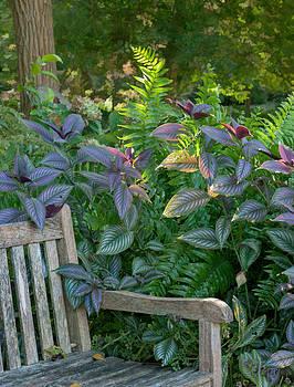 13104 Earful from Plants by John Prichard