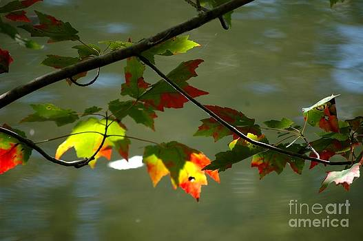 Autumn Light by Christiane Hellner-OBrien