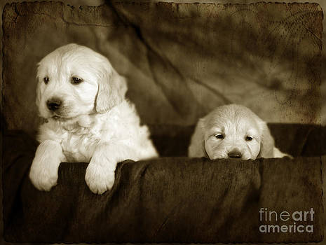 Angel Ciesniarska - Vintage festive puppies