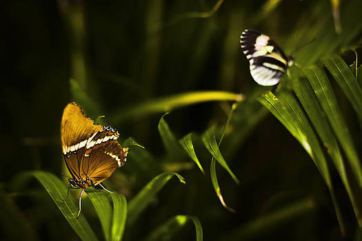 Butterfly by Bradley R Youngberg