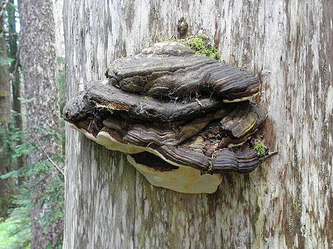 Tree Fungus by Charles Vana