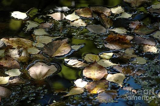 Autumn Light by Christiane Hellner-OBrien