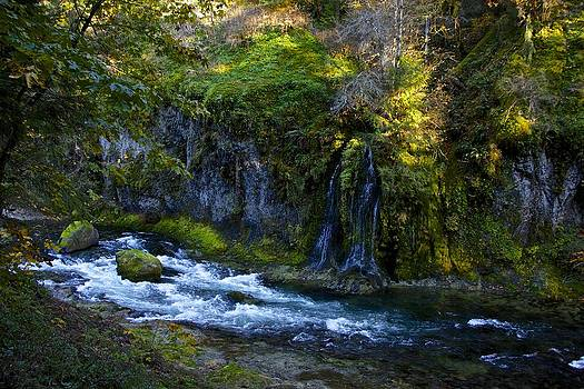 Salmon Creek by Tim Rice