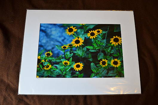 18x24 Matted - Baby Sunflowers 1 by Becky Anders
