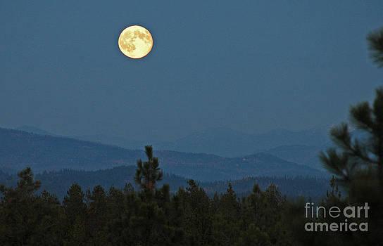 NightVisions - 745P Moon