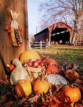 1960s Harvest Display Of Pumpkins by Vintage Images