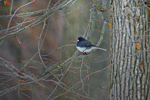1st Little Snow Bird by Sheila Noren