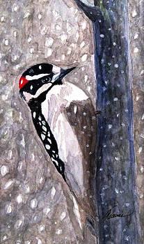 Angela Davies - A Downy Woodpecker