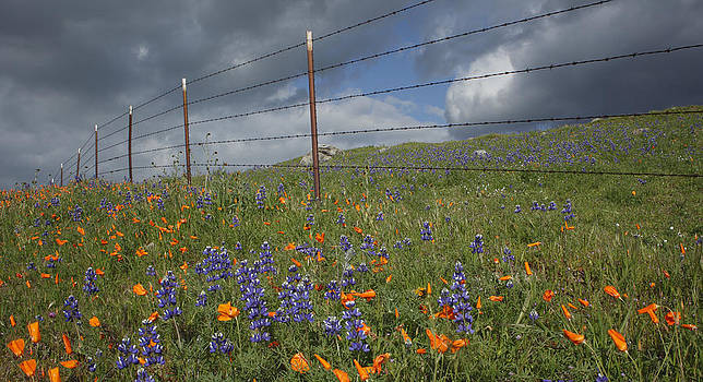 Susan Rovira - A Fence in Arvin 2