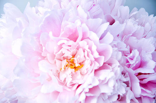 A happy life - Peonies 2 by Risa L