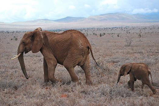 Evgeny Lutsko - African elephant