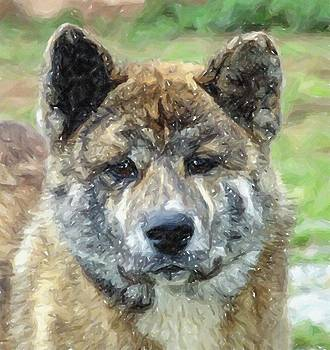 Akita Dog Portrait by Olde Time  Mercantile