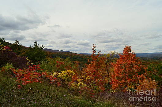 Autumn Splendor by Janet Davaros