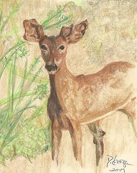Babe  in the Woods - Nevada by Deborah Gorga