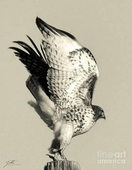 Beautiful Predator by Suzette Kallen