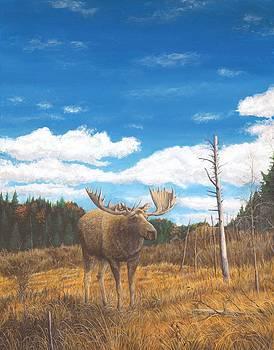 Big Moose Under Big Sky by Marshall Bannister