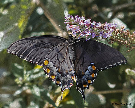 Black Swallowtail by Terry Jacumin