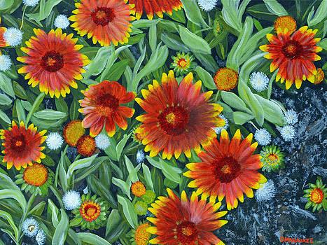 Blanket Flowers by Donna  Manaraze