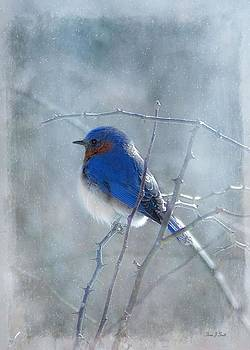 Blue Bird  by Fran J Scott
