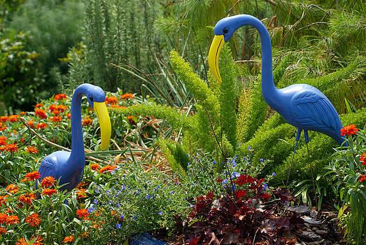 2 Blue Flamingos by David Nichols