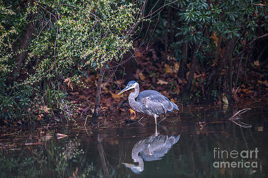Dale Powell - Blue Heron Reflection