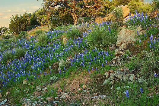 Robert Anschutz - Blue Hillside