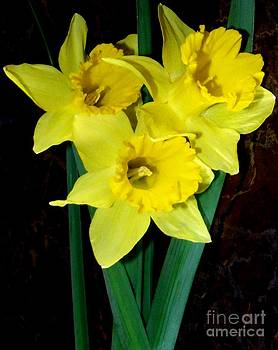 Gail Matthews - Bouquet of Daffodils for You