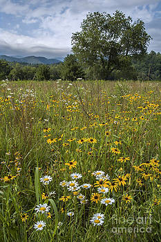 Cades Cove Wildflower Meadow by Ricky Smith