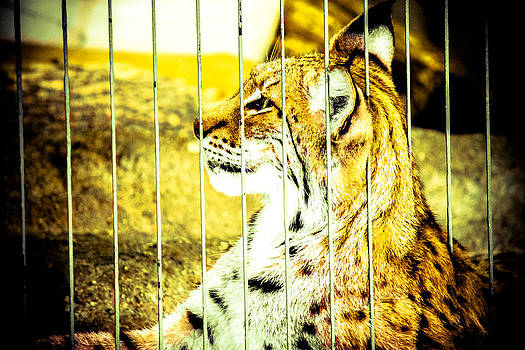 Caged by San Gill