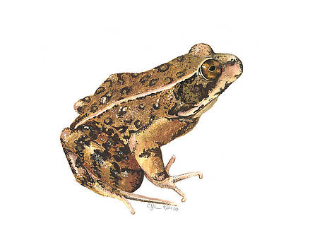 California Red-legged Frog by Cindy Hitchcock